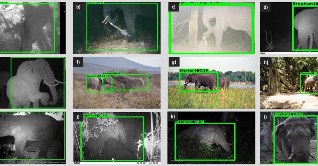 AI per l'ambiente, riconoscimento animali